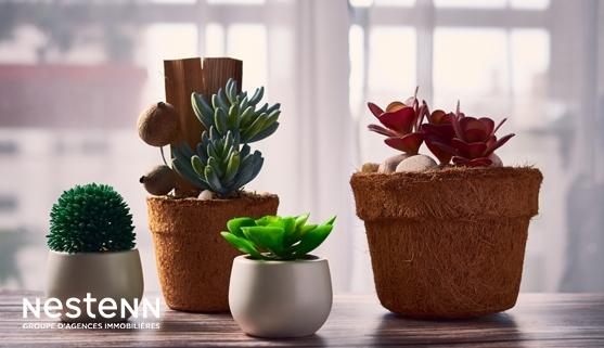 Décoration : Quelles plantes choisir pour votre intérieur ?