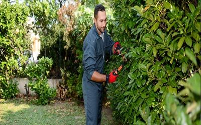 Jardin : prenez les bonnes dispositions anti-froid